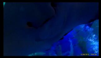 shark dive 1