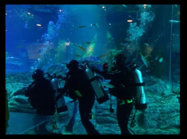 shark dive 10