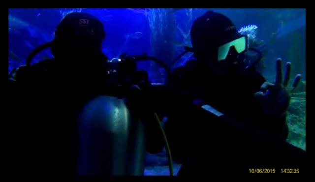 shark dive 3