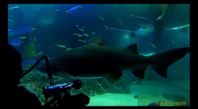 shark dive 6