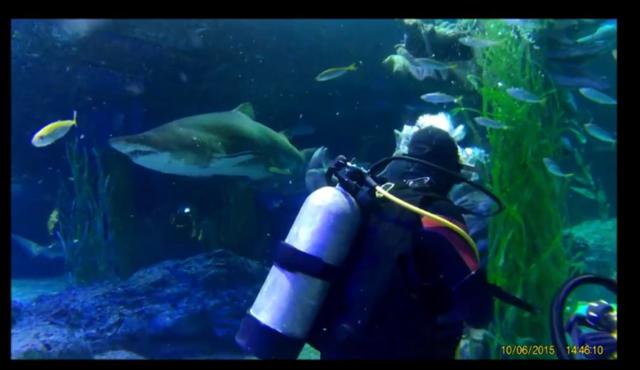 shark dive 7