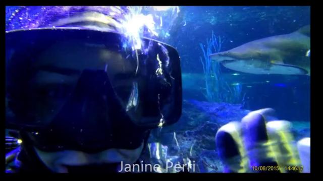 shark dive 9